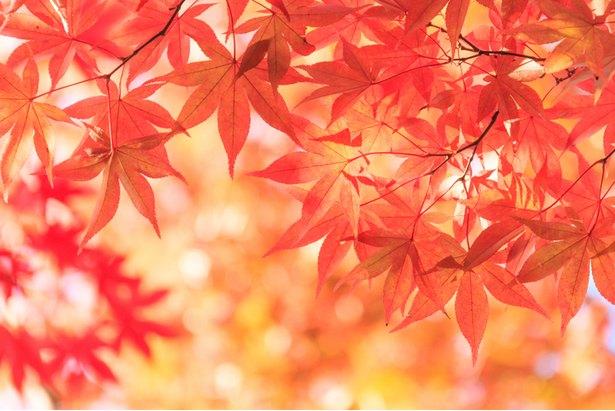 CS60大阪(難波)紅葉時期の予約と身体の悩み相談